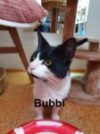 bubbi-2